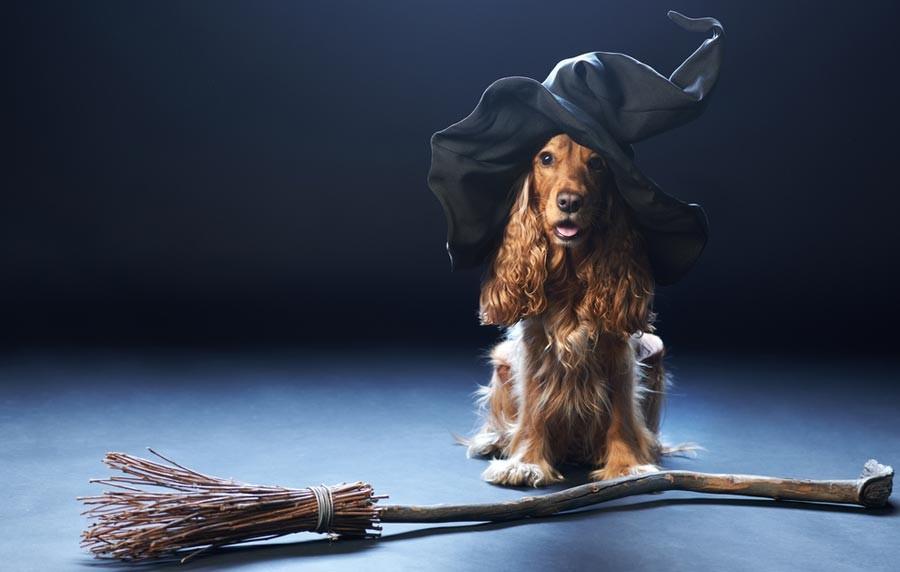 Направи си сам костюм за Хелоуин с минимален бюджет!